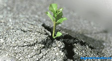 Настойчивость, Упорство, Усердие - инструменты достижения цели