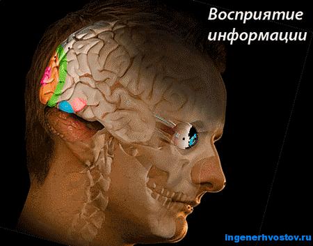 Восприятие информации человеком. Виды информации по способу восприятия