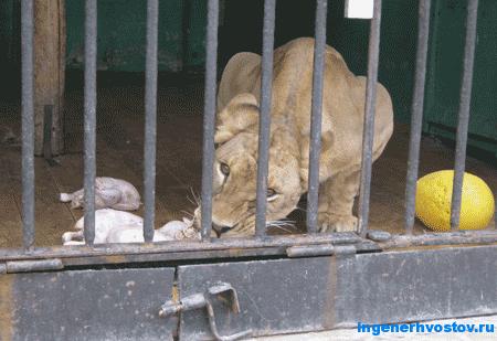 Кормление зверей в зоопарке Петербурга