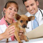 Сколько зарабатывает ветеринар в России