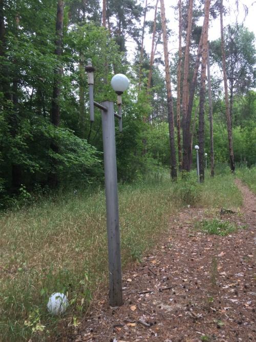 Фонари в лесу