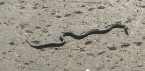 змея, заволжье, Подгоры