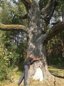 Большое дерево около Берёзовой гривы