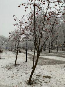 Самарский сквер Фадеева около козловского дома в декабре 2019, деревья в инее