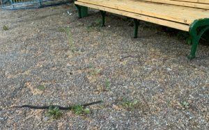 змея в Самарской Луке