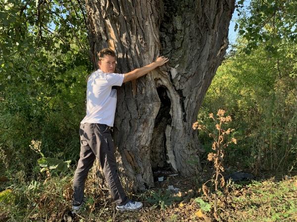 дереву 200 лет