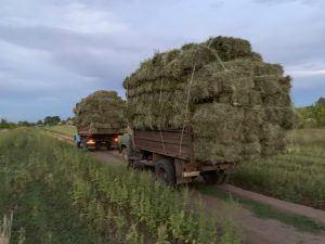 вывоз сена, Самарская Лука, Шелехметь