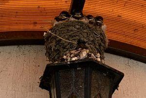 Винновка, гнездо в монастыре