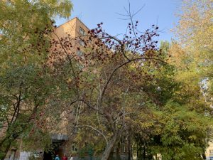 самарский октябрь-4