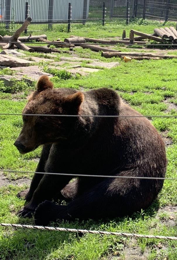 Зоопарк в Пензе-7