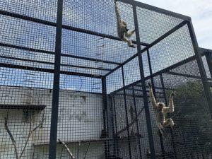 Зоопарк в Пензе-6