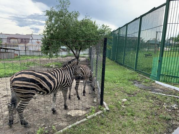 Зоопарк в Пензе-5