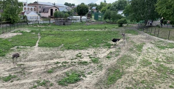 Зоопарк в Пензе-4