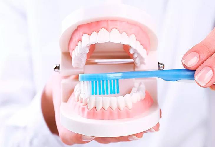 Размещение зубов